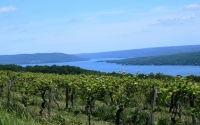 "Finger Lakes earns ""Best Wine Region"" for the second consecutive year."