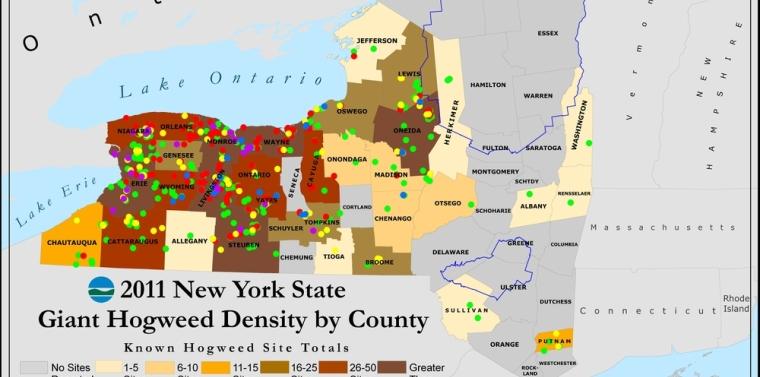Giant Hogweed Michigan Map.Giant Hogweed In New York State Ny State Senate