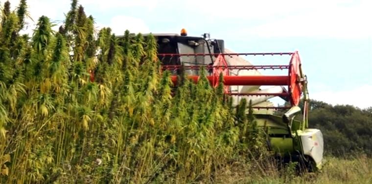 legislative history industrial hemp farming act