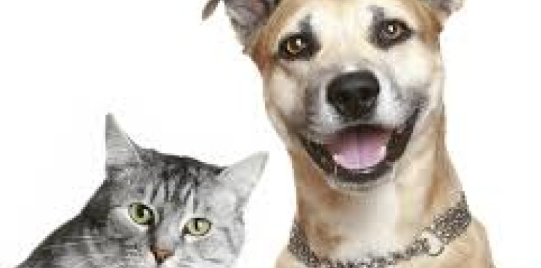 Free Rabies Clinics In Erie County | NY State Senate