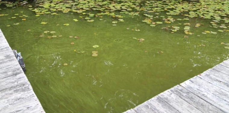 Blue-green algae shuttered beaches at Mohegan Lake each of the last two years.