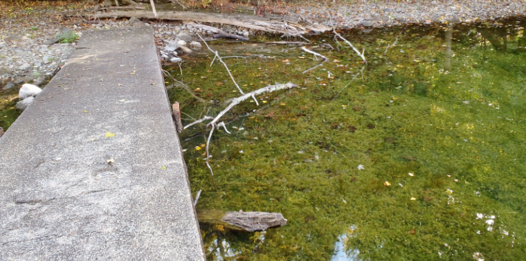 Croton's Black Rock Park continues to struggle with extreme hydrilla growth.
