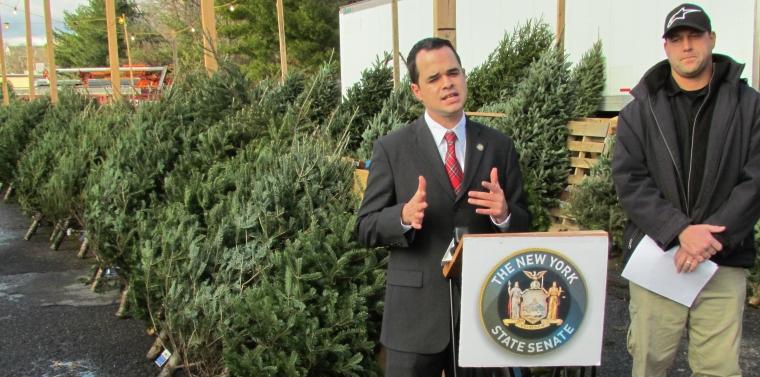 Senator Carlucci Issues Consumer Alert for Artificial Christmas ...
